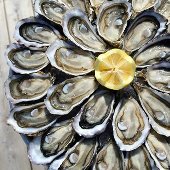 Dégustation d'huîtres en mer