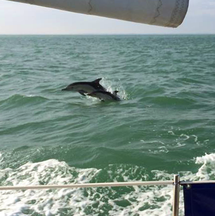 dauphins la rochelle à la voile
